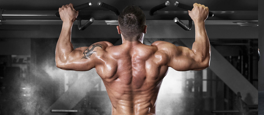 Melhores Exercícios Para Cada Grupo Muscular