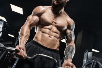 Ser Bodybuilder