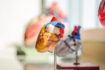 Veja Como A Atividade Física Faz Bem Para O Coração